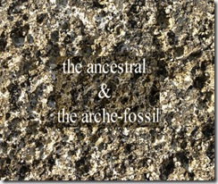 arche fossil stone