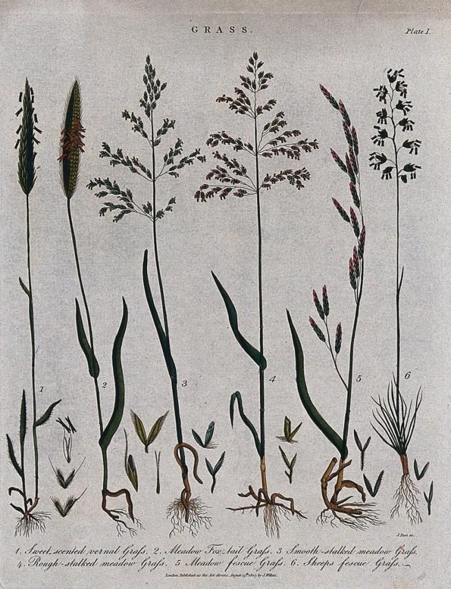 six grasses